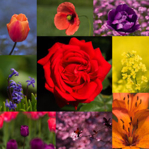 Virág montázs 01